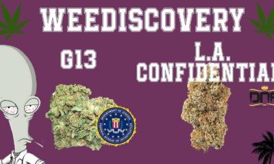 G13 et LA Confidential