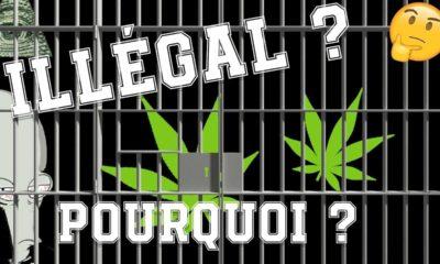 Pourquoi le cannabis est illégal