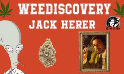 Qui est Jack Herer