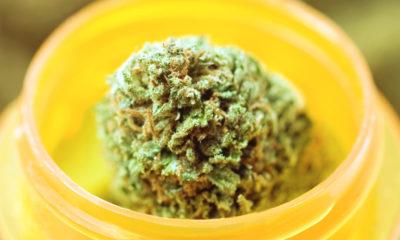 Cannabis médical en République Tchèque