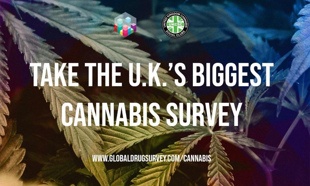 Etude sur le cannabis au Royaume-Uni