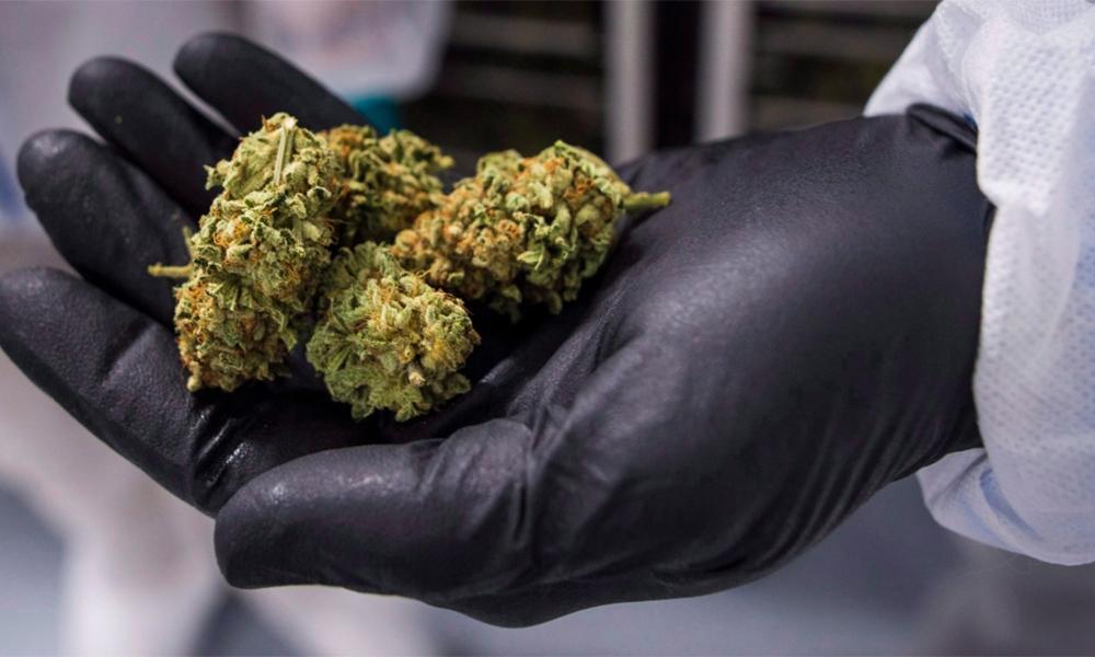 Ontario perd de l'argent en vendant du cannabis
