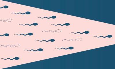 Cannabis et fertilité masculine