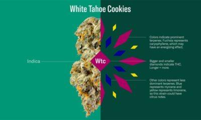 Variétés de cannabis de Leafly
