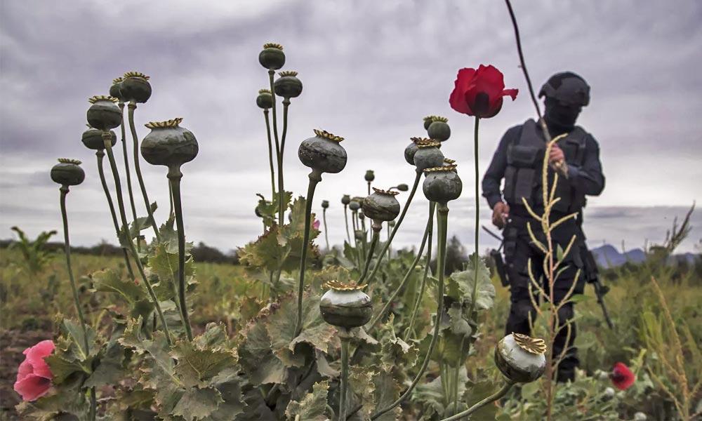Légalisation des drogues au Mexique