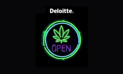 Deloitte et cannabis