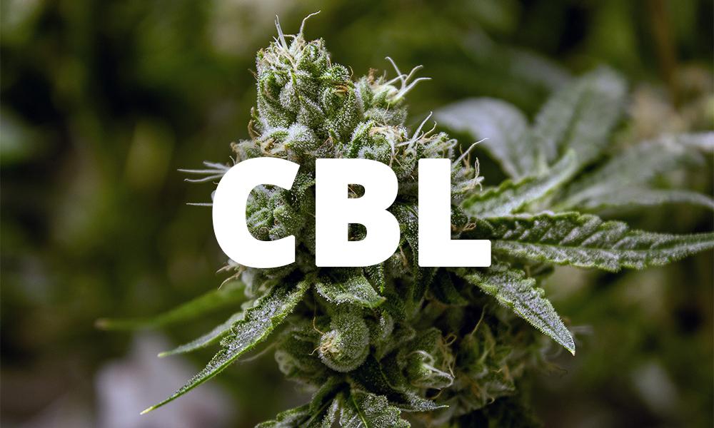 Le cannabicyclol (CBL)