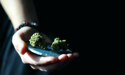 Enquête cannabis médical au UK