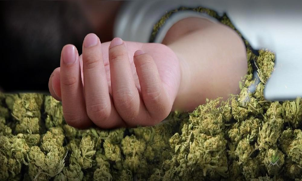Overdose au cannabis