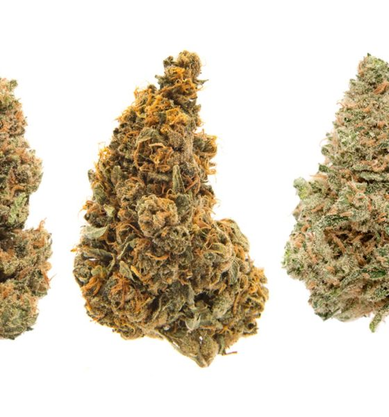 Variétés de cannabis THCV