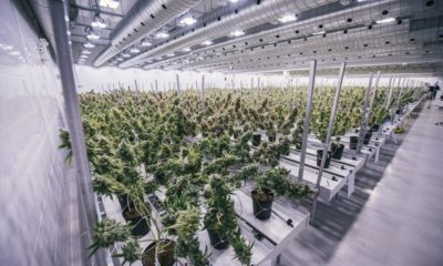 Canopy Growth en 2020