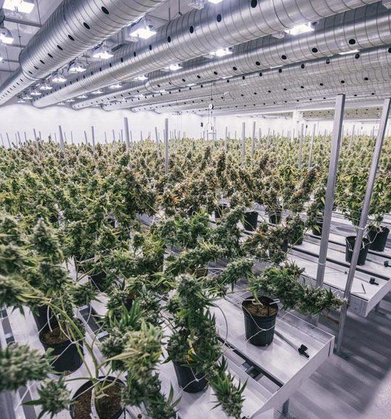 Canopy Growth en 2020