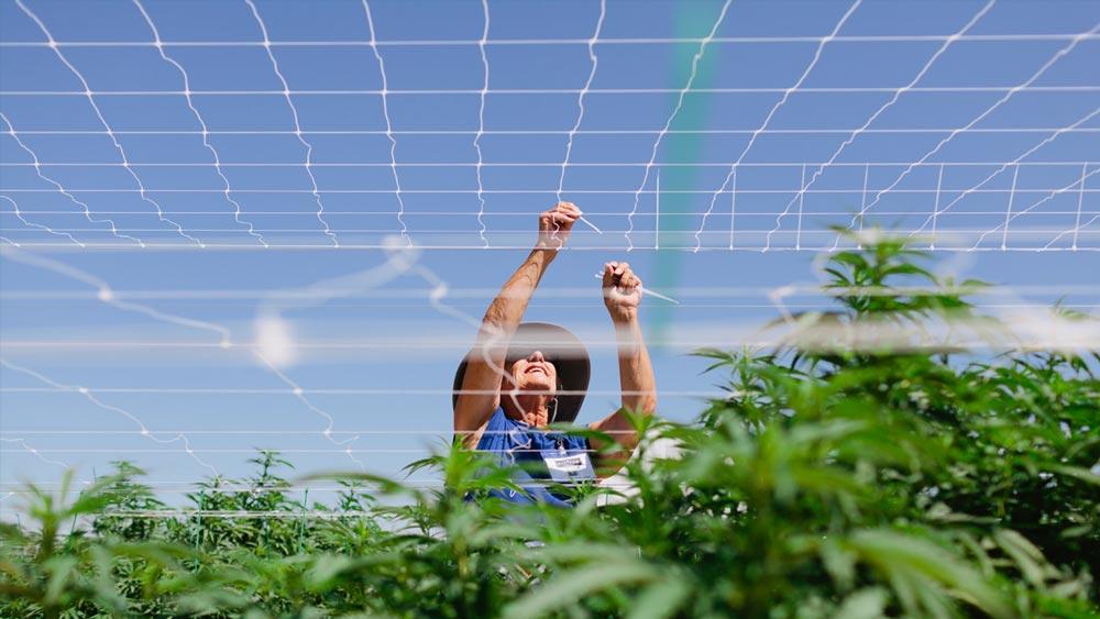 Emplois dans le cannabis légal aux Etats-Unis