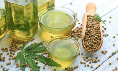 CBD et THC dans l'huile de chanvre