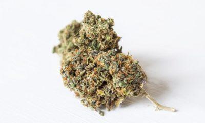 Taxe sur le cannabis light en Suisse