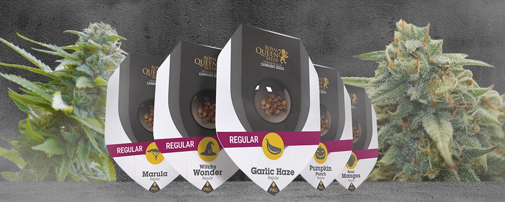 Variétés régulières Royal Queen Seeds