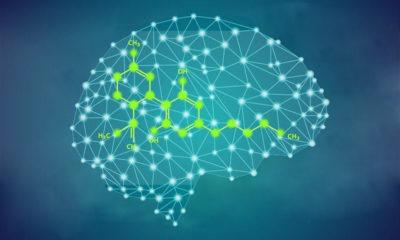 CBD et mort des cellules cérébrales