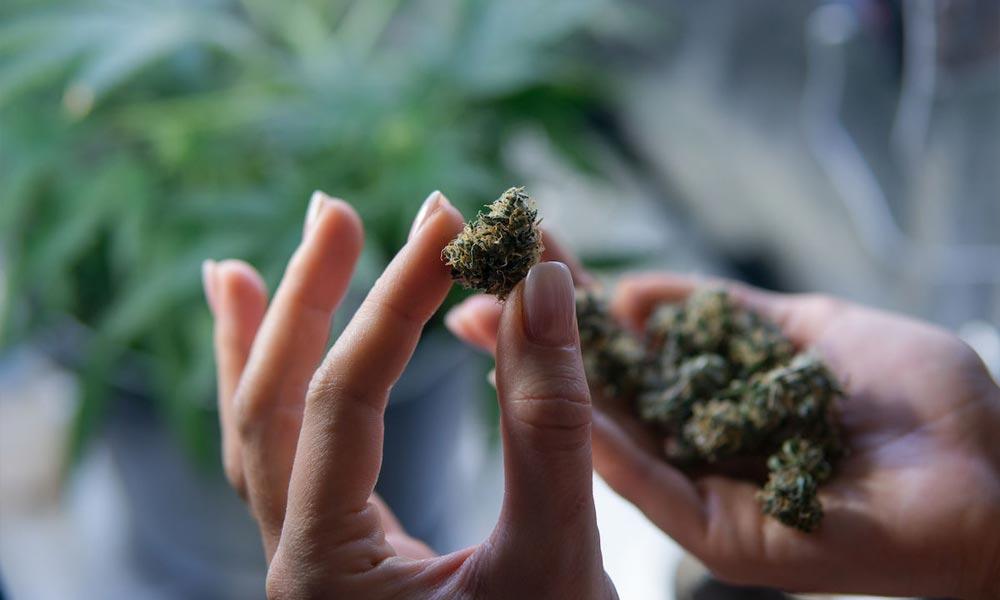 Enquête Cannavid sur COVID-19 et cannabis