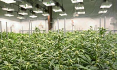 Aurora Cannabis en Suisse