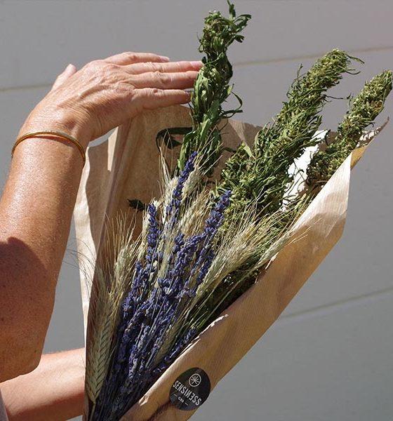 Bouquet de fleurs de chanvre