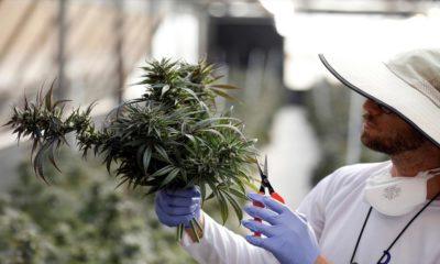 Israël et légalisation du cannabis