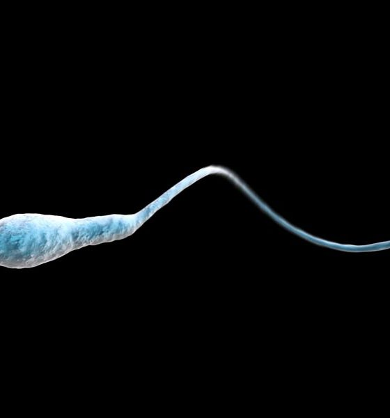 Spermatozoïde et THC