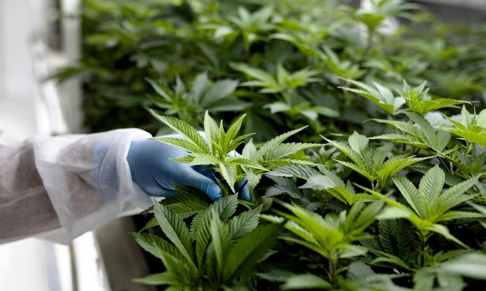 Import de cannabis médical en Israël