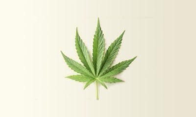 Cannabis et maladie cardiaque