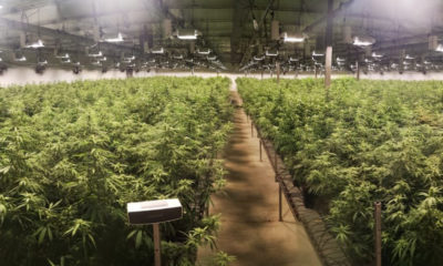 Cannabis light en Suisse