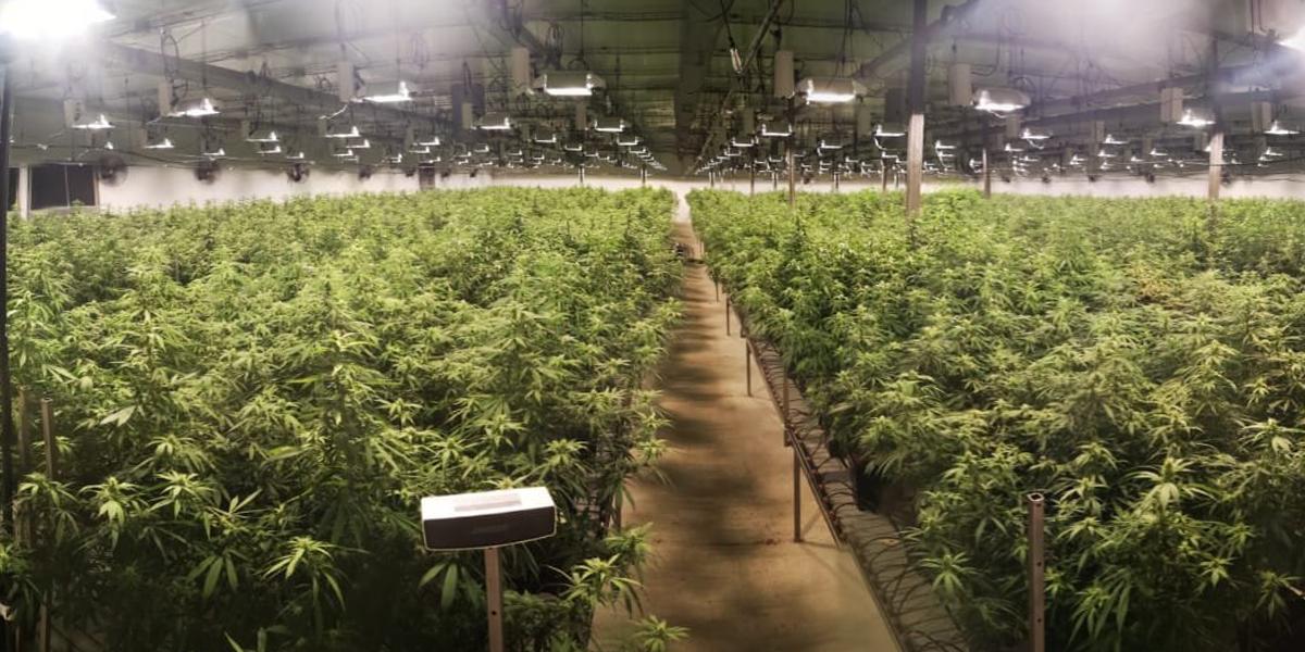 Cannabis light en Suisse