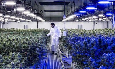 Le cannabis médical en Bourse au Royaume-Uni