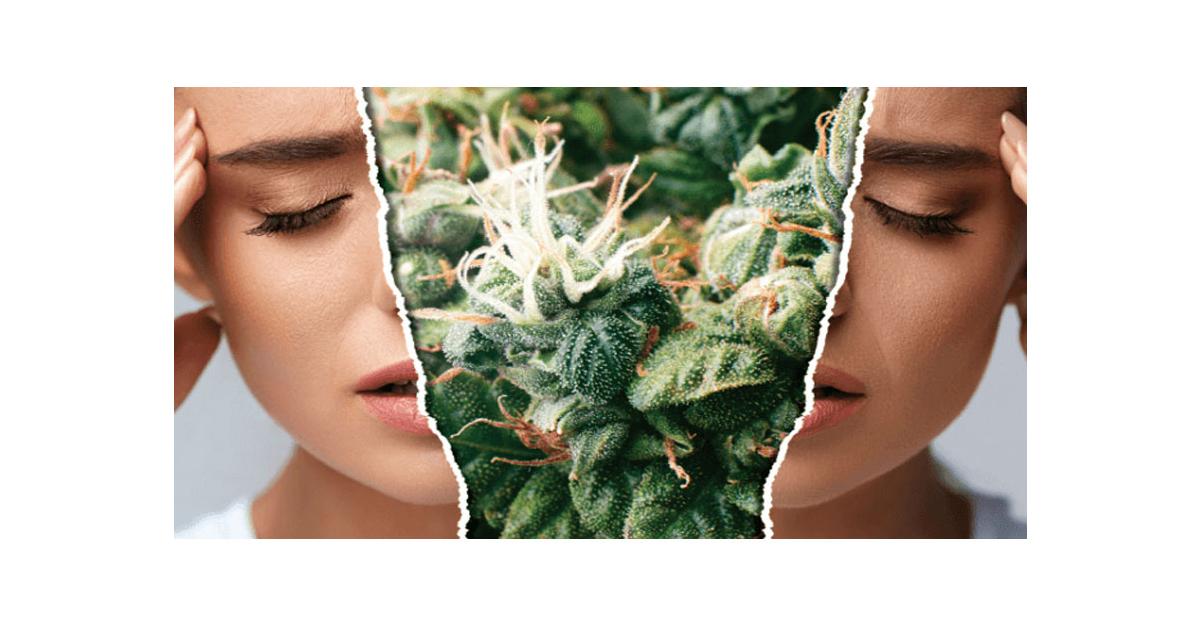 Cannabis et migraines