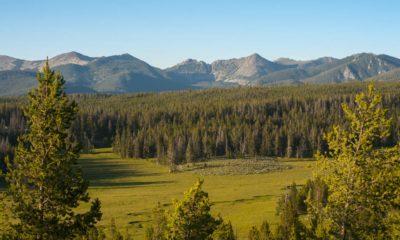 Légalisation du cannabis au Montana