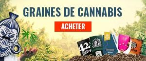 graines cannabis