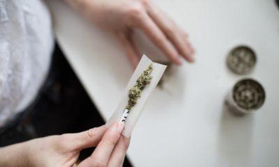 Amende cannabis pour les consommateurs