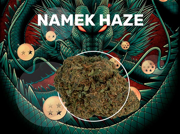 Namek Haze