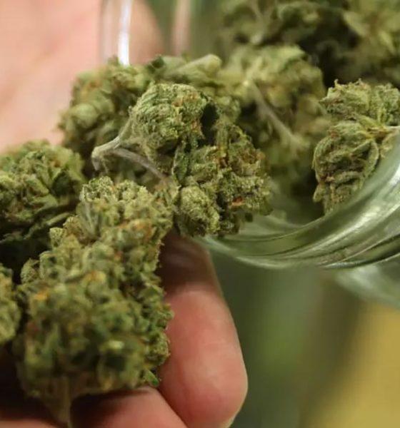 Cannabis light en Italie