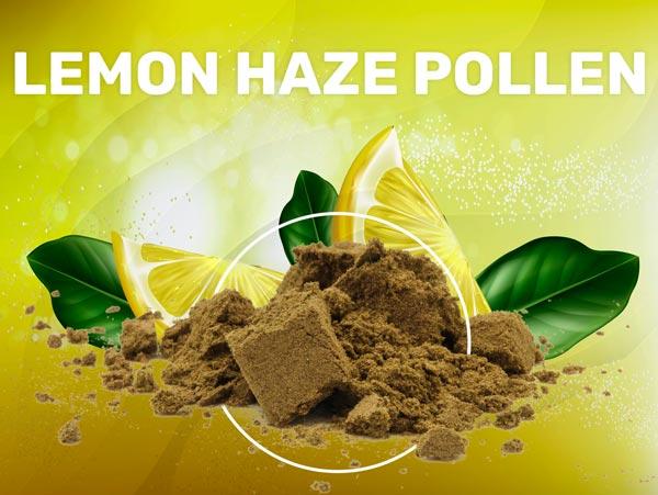 Lemon Haze Pollen