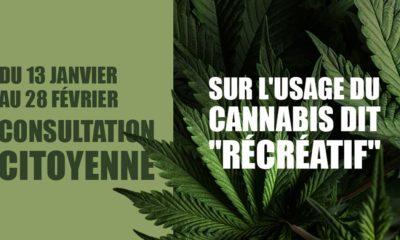 Consultation citoyenne sur le cannabis récréatif