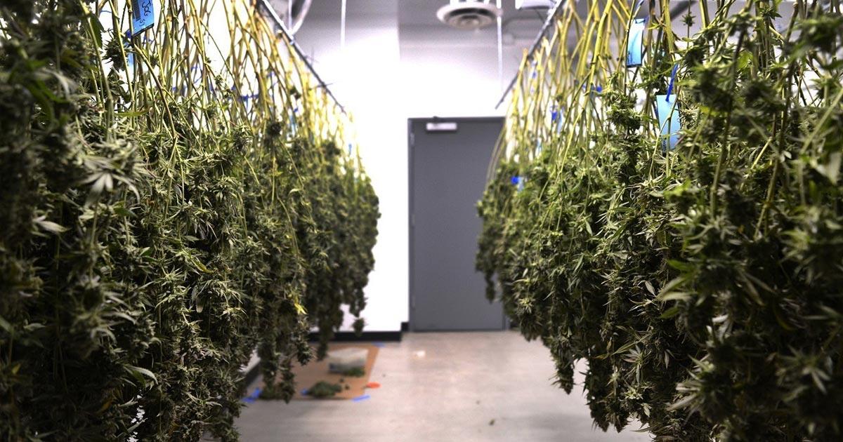 Ventes de cannabis en Illinois en 2020