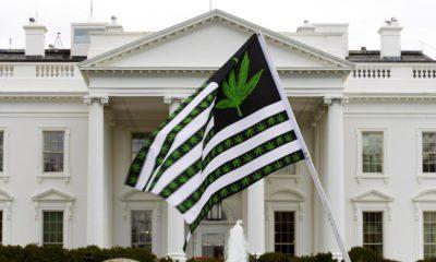 Marée verte de légalisation du cannabis aux Etats-Unis
