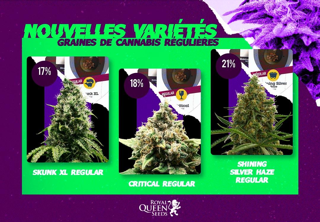 Variétés cannabis régulières Royal Queen Seeds