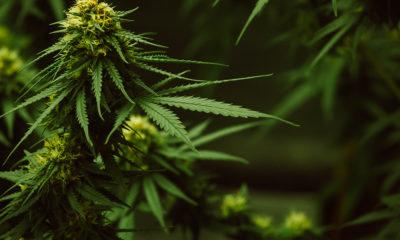 Légalisation du cannabis en Pennsylvanie