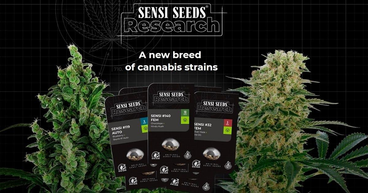 Sensi Seeds et graines en Allemagne