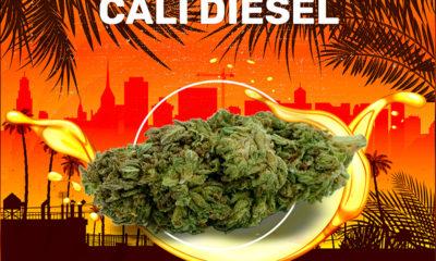 Cali Diesel