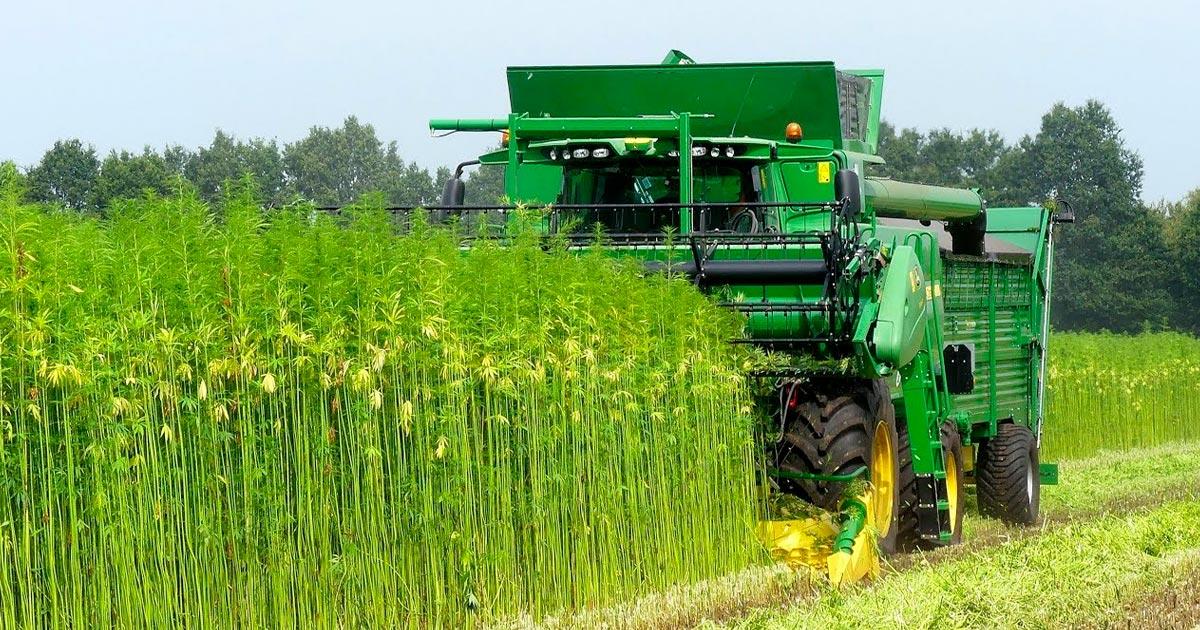 Idaho légalise chanvre industriel