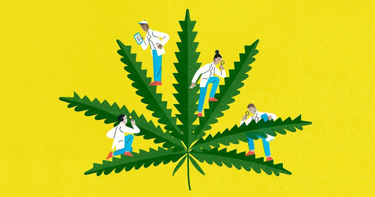 Cannabis et maladies cardiovsculaires