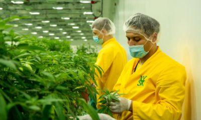 Cannabis en Macédoine du Nord