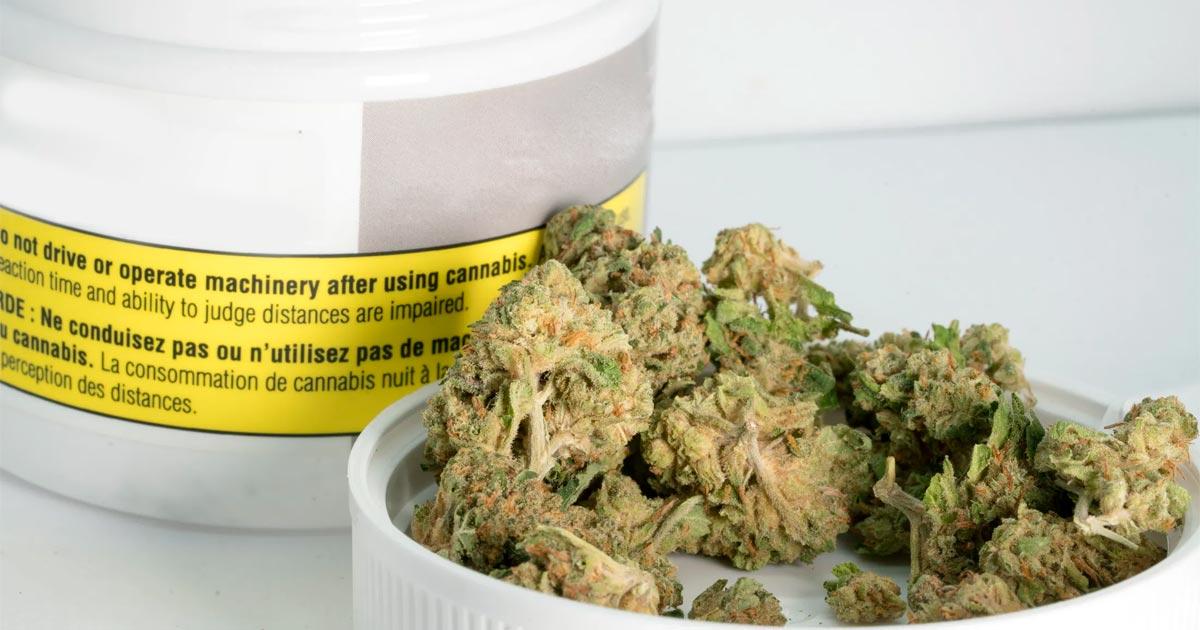 Fleur de cannabis médical en Allemagne