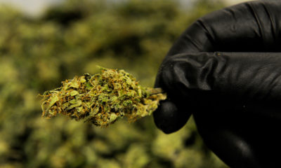 Cannabis médical au Luxembourg